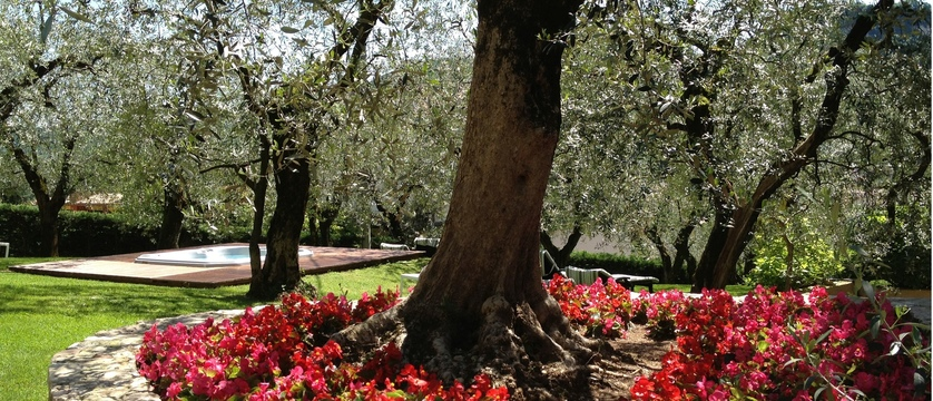 Hotel Degli Olivi - Garden.jpg